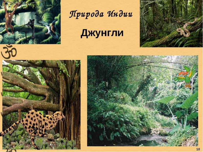 Природа Индии Джунгли 10