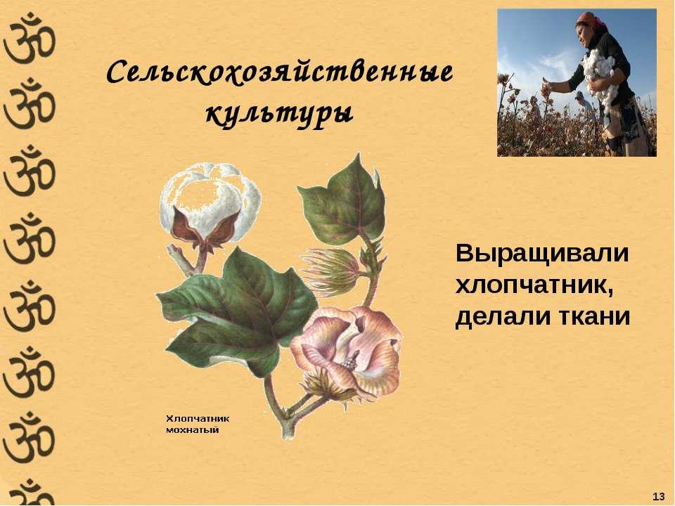 Сельскохозяйственные культуры Выращивали хлопчатник, делали ткани 13