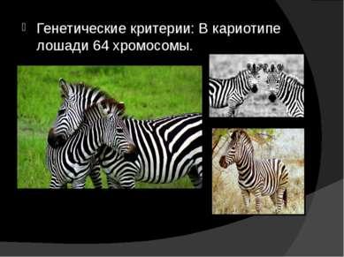 Генетические критерии: В кариотипе лошади 64 хромосомы.