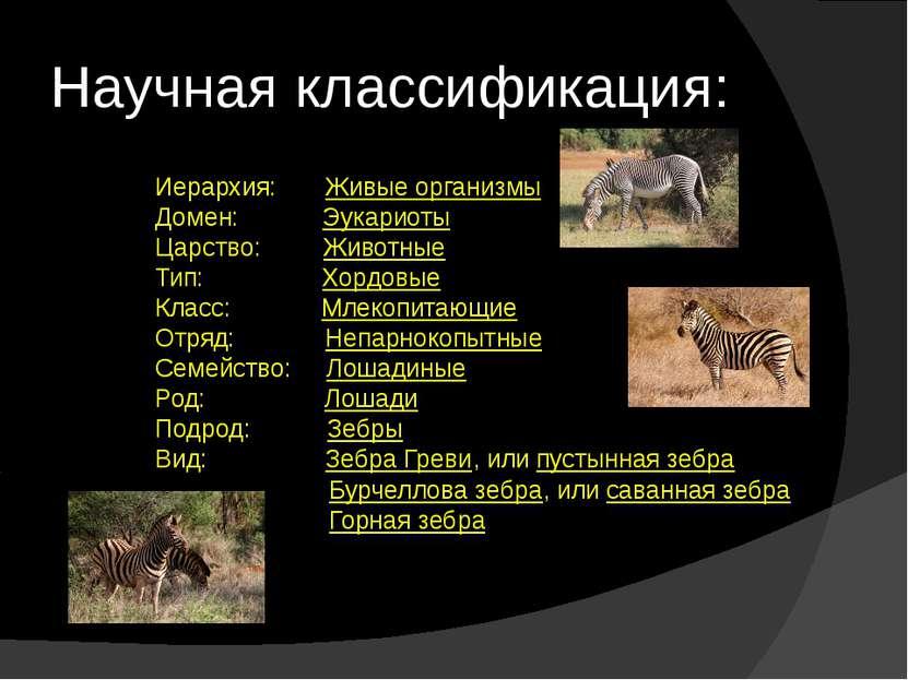 Научная классификация: Иерархия: Живые организмы Домен: Эукариоты Царство: ...
