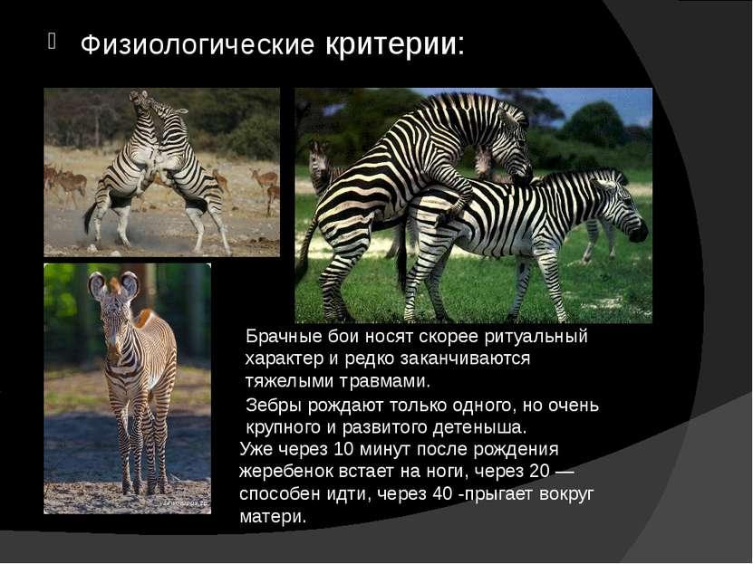Физиологические критерии: Зебры рождают только одного, но очень крупного и ра...