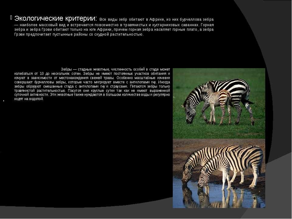 Экологические критерии: Все виды зебр обитают в Африке, из них бурчеллова зеб...
