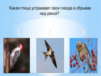 Какая птица устраивает свои гнезда в обрывах над рекой? 1 2 3
