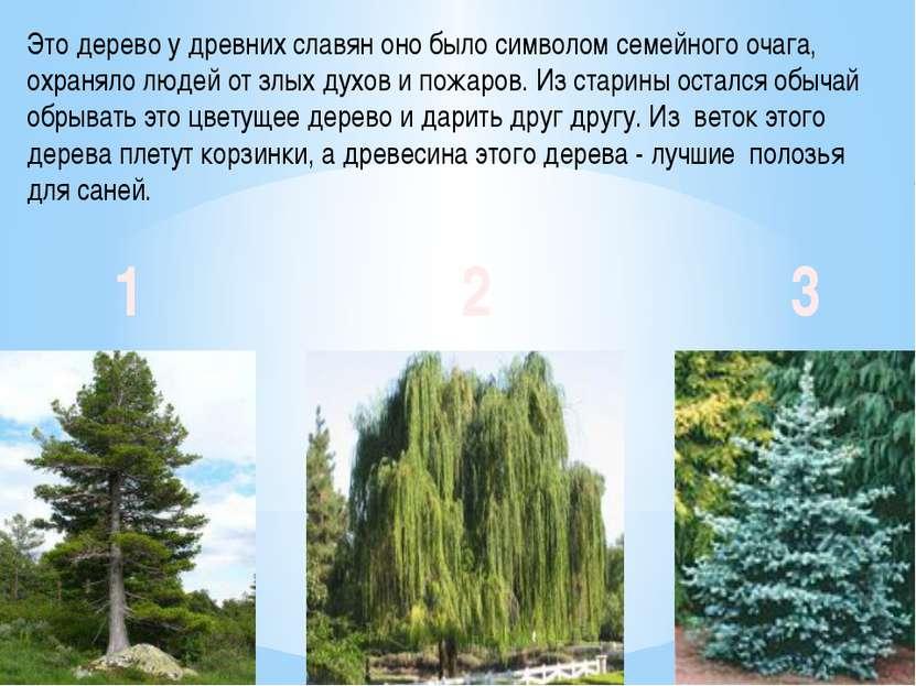 Это дерево у древних славян оно было символом семейного очага, охраняло людей...