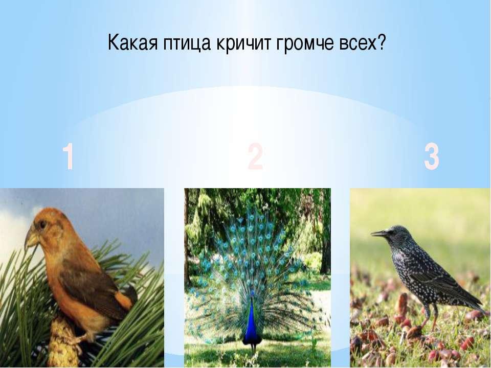 Какая птица кричит громче всех? 1 2 3