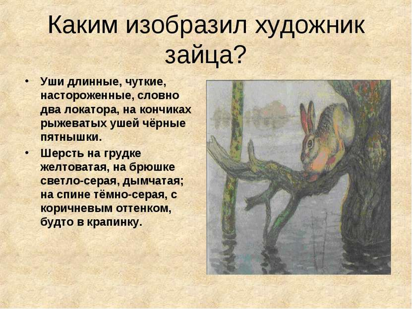 Каким изобразил художник зайца? Уши длинные, чуткие, настороженные, словно дв...
