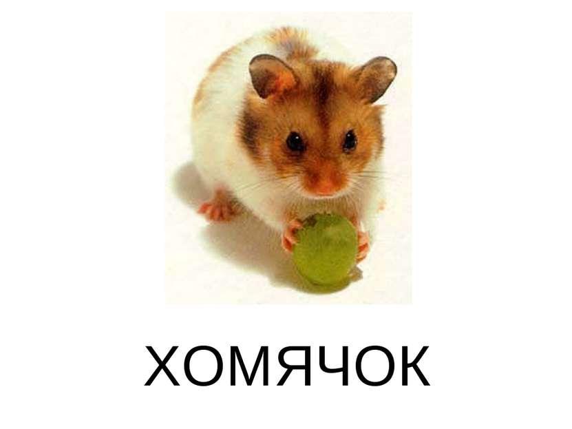 ХОМЯЧОК