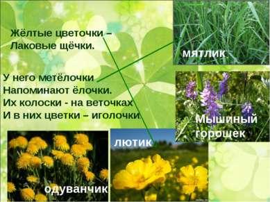 Жёлтые цветочки – Лаковые щёчки. У него метёлочки Напоминают ёлочки. Их колос...