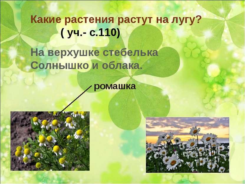 Какие растения растут на лугу? ( уч.- с.110) На верхушке стебелька Солнышко и...