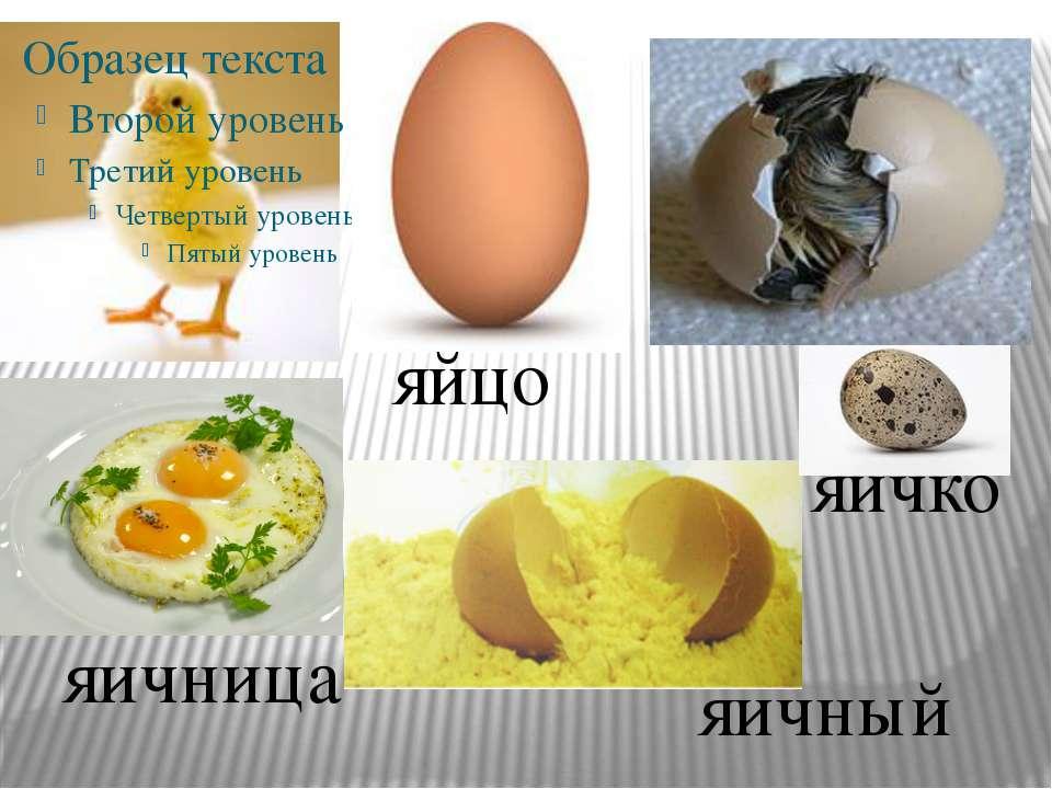 яйцо яичко яичница яичный