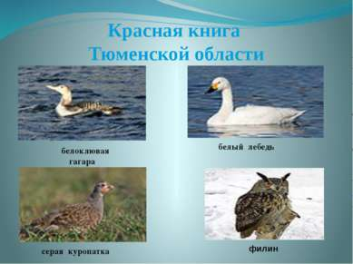Красная книга Тюменской области белоклювая гагара белый лебедь серая куропатк...