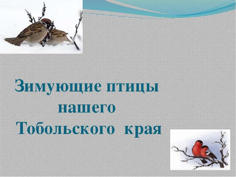 Зимующие птицы нашего Тобольского края