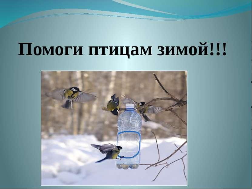 Помоги птицам зимой!!!