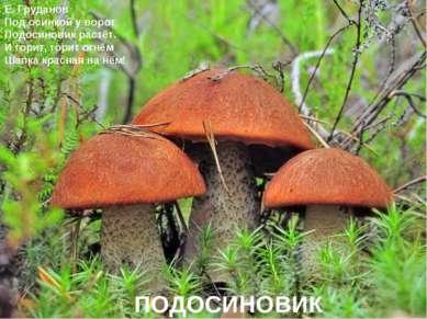 Е. Груданов Под осинкой у ворот Подосиновик растёт. И горит, горит огнём Шапк...