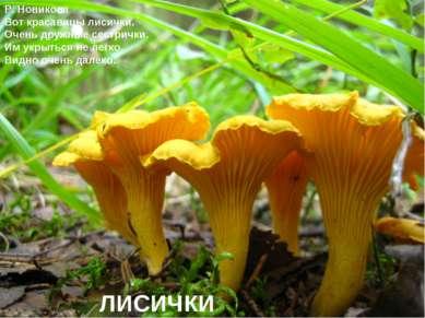 Р. Новикова Вот красавицы лисички. Очень дружные сестрички. Им укрыться не ле...