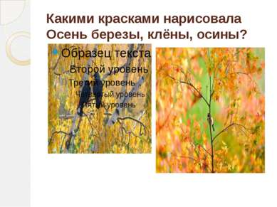 Какими красками нарисовала Осень березы, клёны, осины?