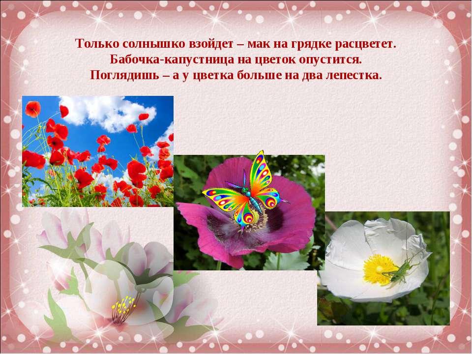 Только солнышко взойдет – мак на грядке расцветет. Бабочка-капустница на цвет...