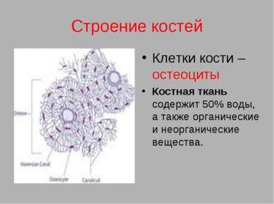Строение костей Клетки кости – остеоциты Костная ткань содержит 50% воды, а т...