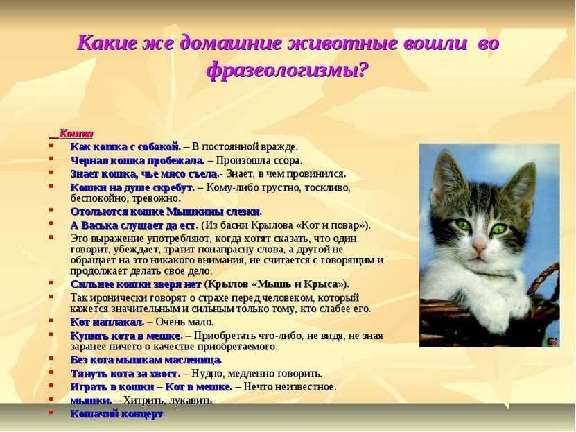 Какие же домашние животные вошли во фразеологизмы? Кошка Как кошка с собакой....