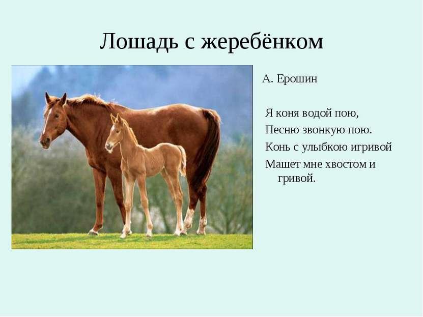 Лошадь с жеребёнком А. Ерошин Я коня водой пою, Песню звонкую пою. Конь с улы...