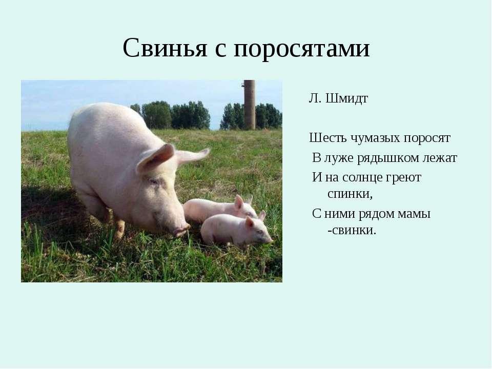 Свинья с поросятами Л. Шмидт Шесть чумазых поросят В луже рядышком лежат И на...