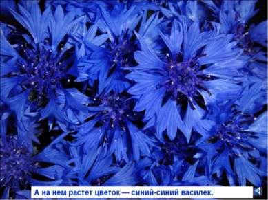 А на нем растет цветок — синий-синий василек.