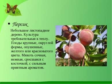 Персик Небольшое листопадное дерево. Культура требовательная к теплу. Плоды к...