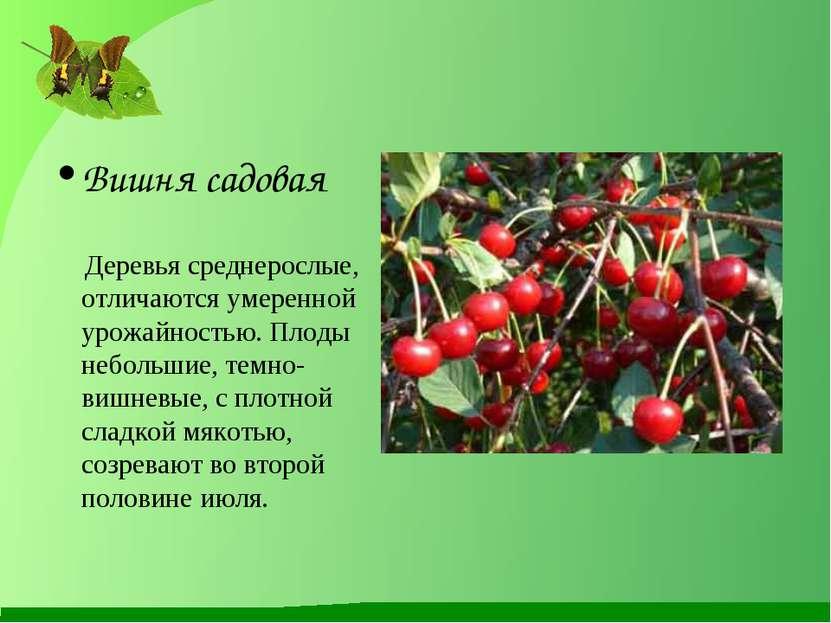 Вишня садовая Деревья среднерослые, отличаются умеренной урожайностью. Плоды ...