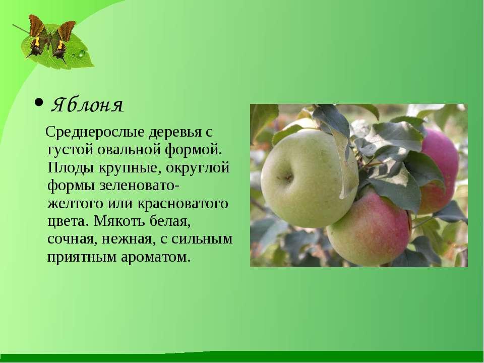 Яблоня Среднерослые деревья с густой овальной формой. Плоды крупные, округлой...