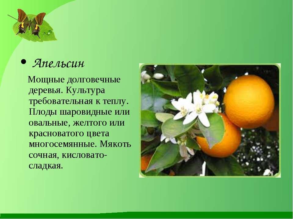 Апельсин Мощные долговечные деревья. Культура требовательная к теплу. Плоды ш...