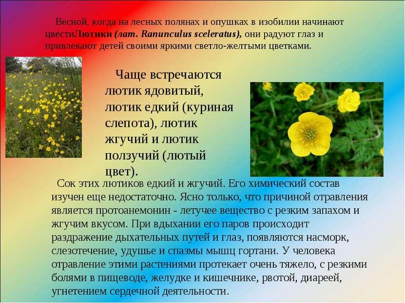 Весной, когда на лесных полянах и опушках в изобилии начинают цвестиЛютики(л...