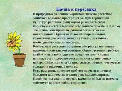 Почва и пересадка В природных условиях корневая система растений занимает бол...