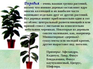 Деревья – очень важная группа растений, потому что именно деревья составляют ...