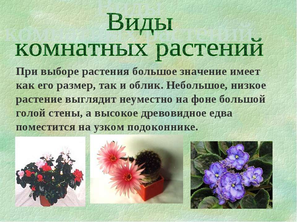 При выборе растения большое значение имеет как его размер, так и облик. Небол...