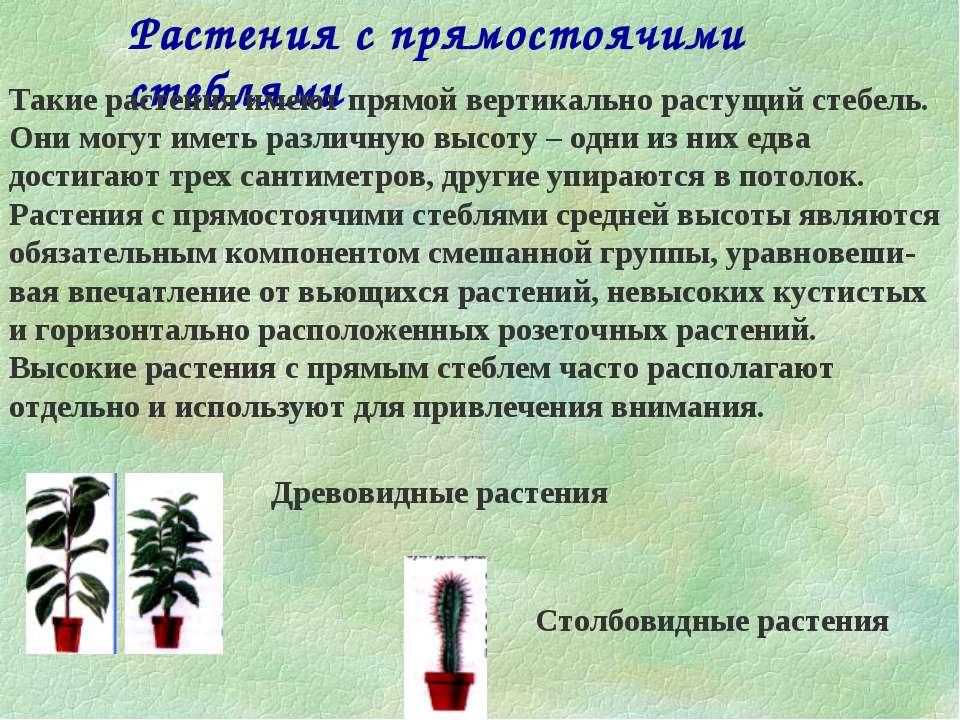 Растения с прямостоячими стеблями Такие растения имеют прямой вертикально рас...