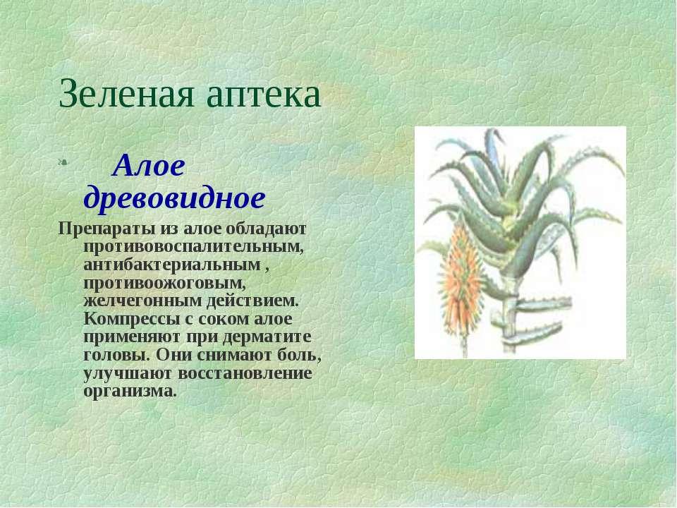 Зеленая аптека  Алое древовидное Препараты из алое обладают противовоспа...