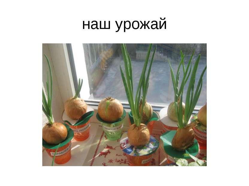 наш урожай