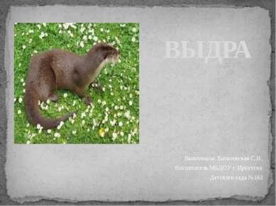 ВЫДРА Выполнила: Базилевская С.В., Воспитатель МБДОУ г. Иркутска Детского сад...