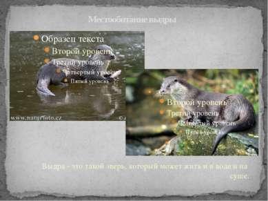 Местообитание выдры Выдра - это такой зверь, который может жить и в воде и на...