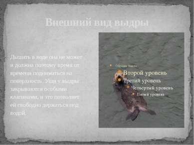 Внешний вид выдры Дышать в воде она не может и должна поэтому время от времен...