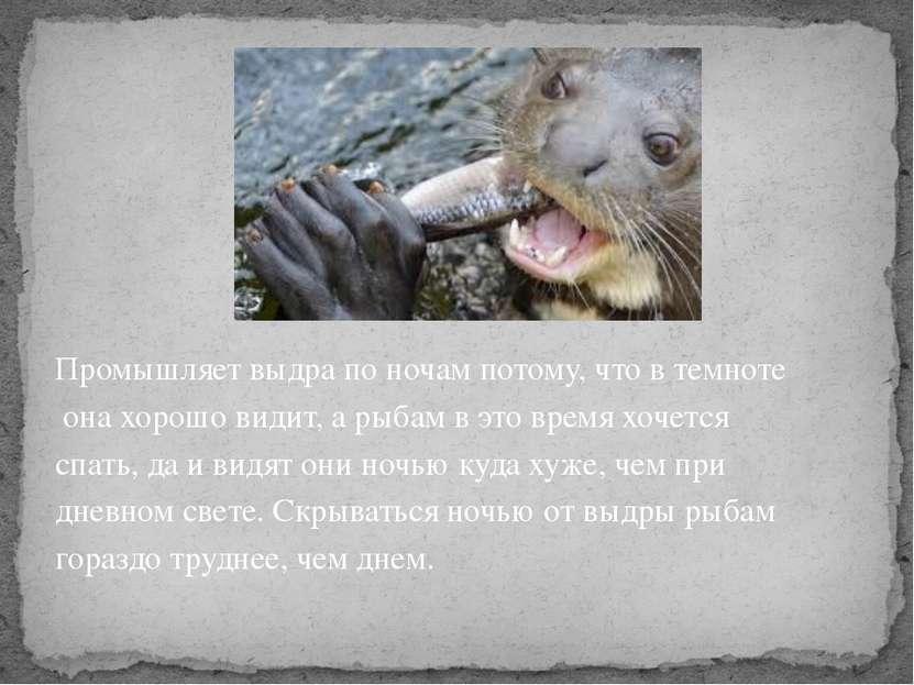 Промышляет выдра по ночам потому, что в темноте она хорошо видит, а рыбам в э...