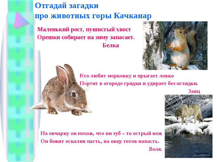 Отгадай загадки про животных горы Качканар Маленький рост, пушистый хвост Оре...