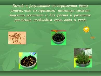 Вывод: в результате эксперимента дети узнали, что из зёрнышек пшеницы может в...