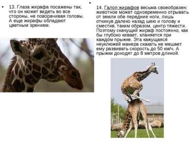 13. Глаза жирафа посажены так, что он может видеть во все стороны, не поворач...
