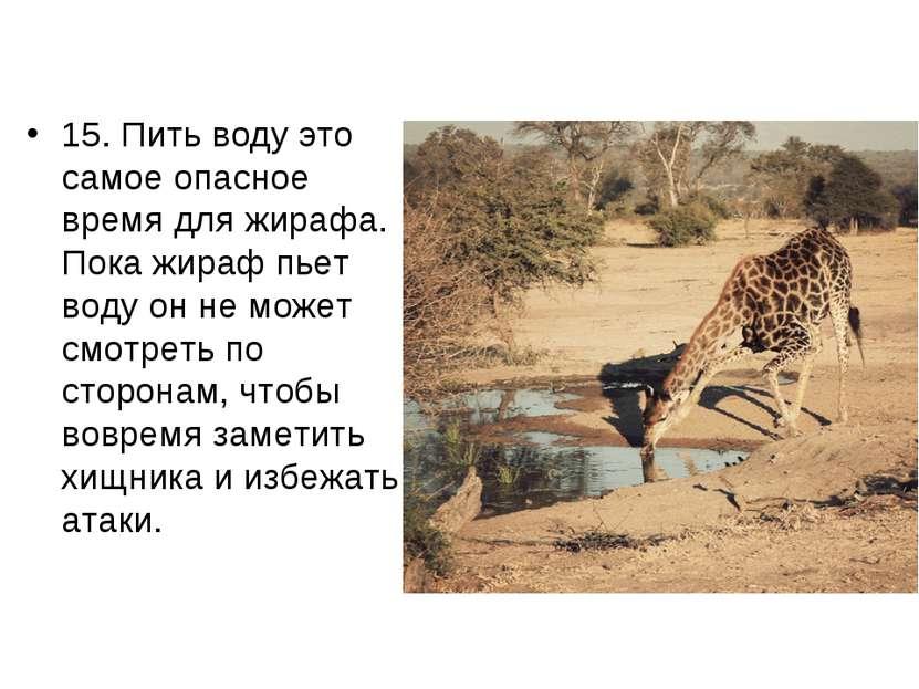 15. Пить воду это самое опасное время для жирафа. Пока жираф пьет воду он не ...