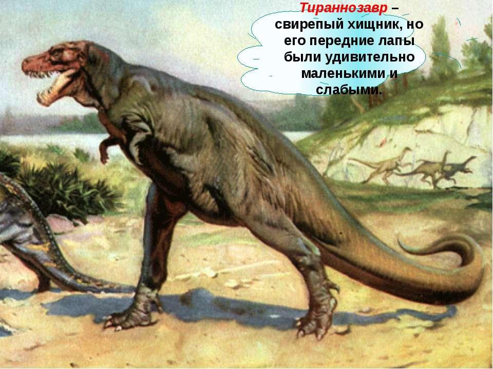 Тираннозавр – свирепый хищник, но его передние лапы были удивительно маленьки...