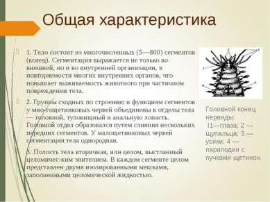 Общая характеристика 1. Тело состоит из многочисленных (5—800) сегментов (кол...