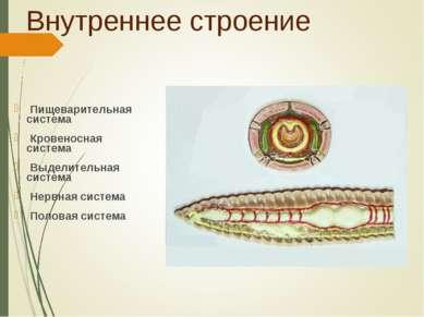 Внутреннее строение Пищеварительная система Кровеносная система Выделительная...