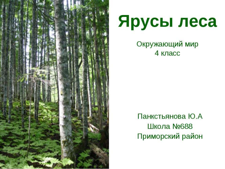 Ярусы леса Окружающий мир 4 класс Панкстьянова Ю.А Школа №688 Приморский район