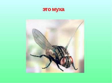 это муха